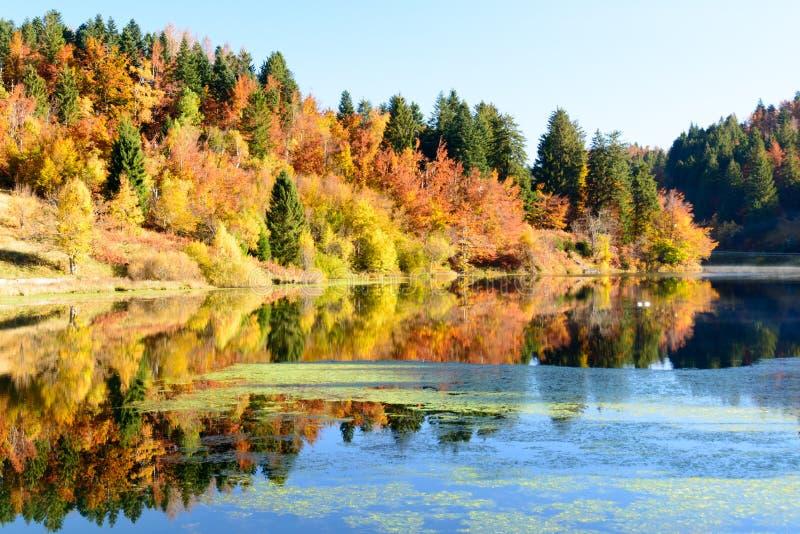 反射在水中的秋叶 免版税库存照片