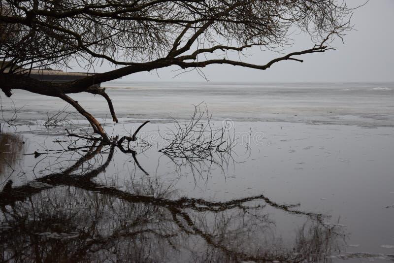 反射在水中 库存照片