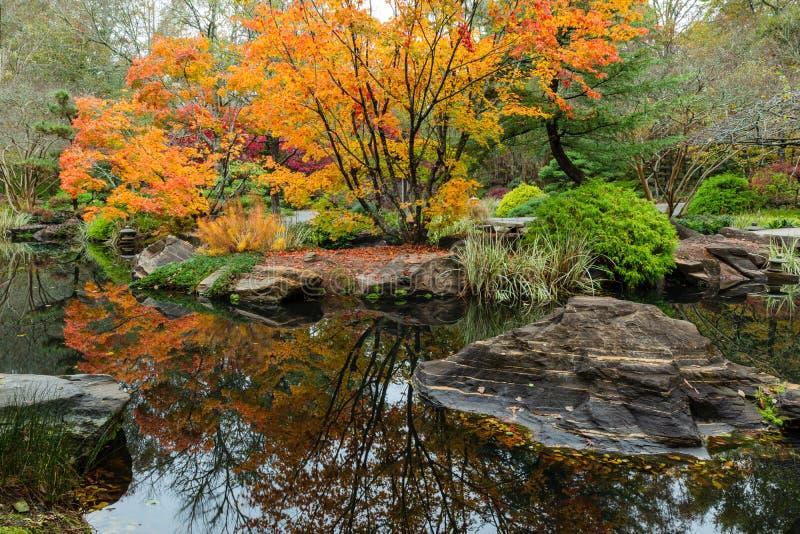 反射在池塘的五颜六色的槭树在日本庭院里在吉布斯在乔治亚 库存照片