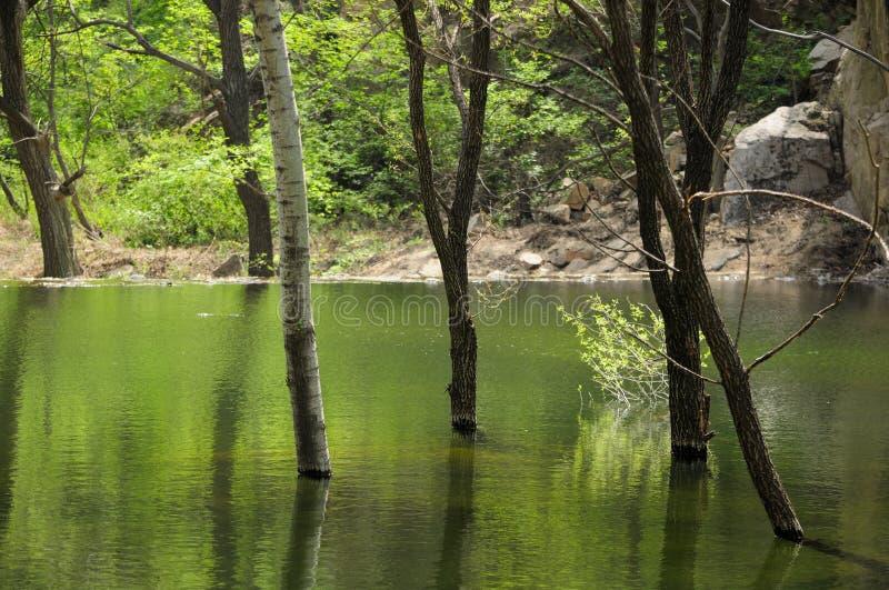 Download 反射在瓷的水的树 库存图片. 图片 包括有 本质, 岩石, 自然, 外面, 湖边, 极大, 反射, 旁观者 - 72359743