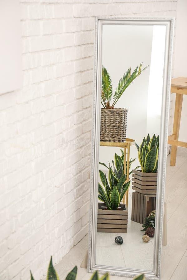 反射在镜子的装饰百合科植物植物 库存图片
