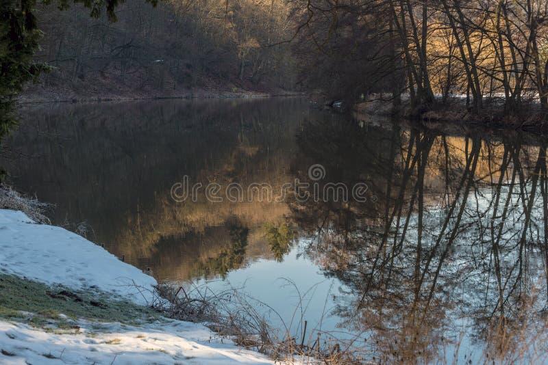 反射河表面上的树的阴影 图库摄影