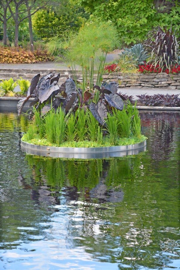 反射的池塘 免版税库存照片