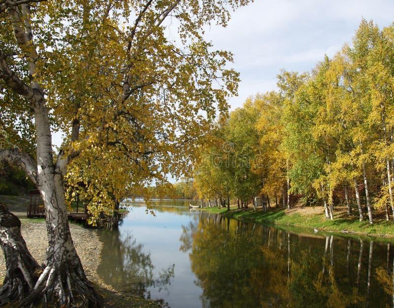 反射的河结构树 库存图片