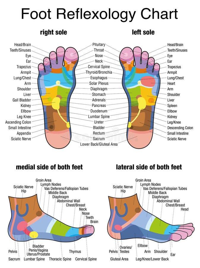 反射论脚底单一外形脚 皇族释放例证