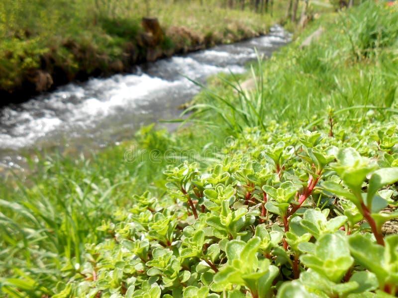 反弹在与植物的山JesenÃky由河 免版税库存照片