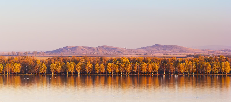 反映在有Macin山的多瑙河的秋天树在背景中 免版税库存图片