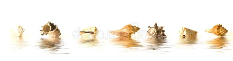 反映海运壳 免版税图库摄影