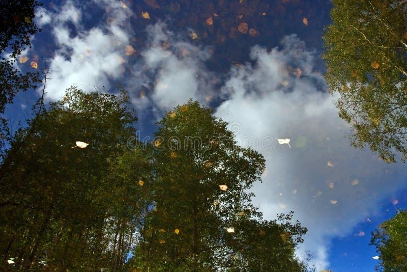 反映结构树水 库存图片