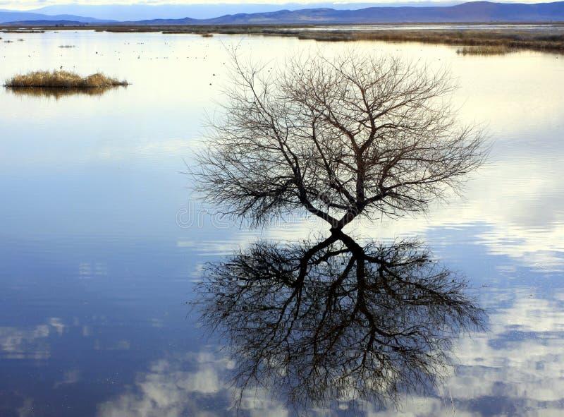 反映结构树沼泽地 免版税库存照片