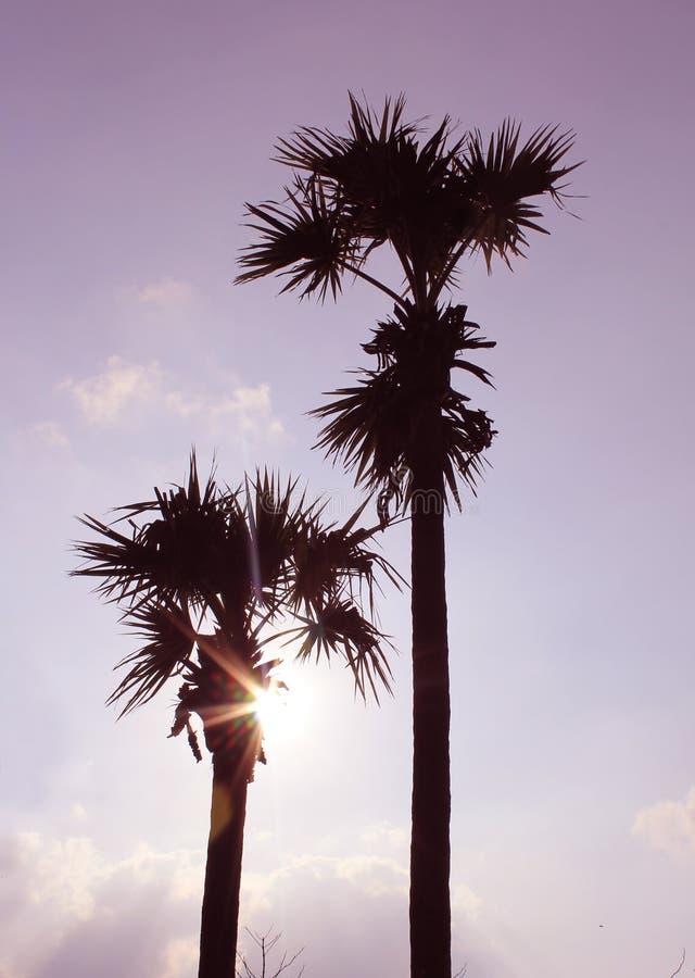 发光与棕榈树的太阳射线 图库摄影