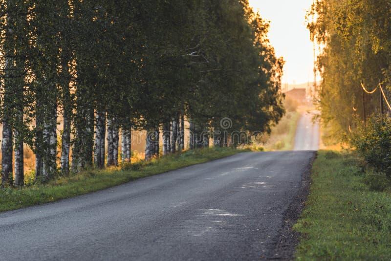 发光在有桦树胡同的路末端的太阳除它以外-晴朗的夏日,金黄小时,部分被弄脏 免版税库存图片