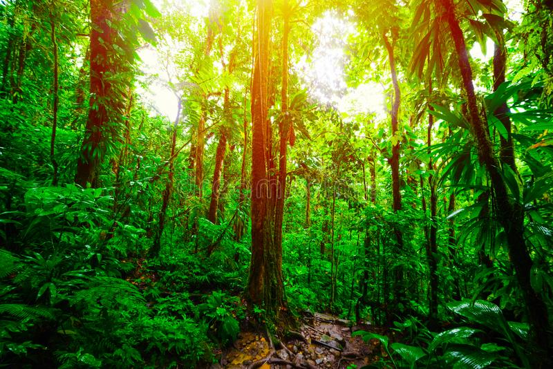 发光在绿色树的太阳在巴斯特尔密林 免版税图库摄影