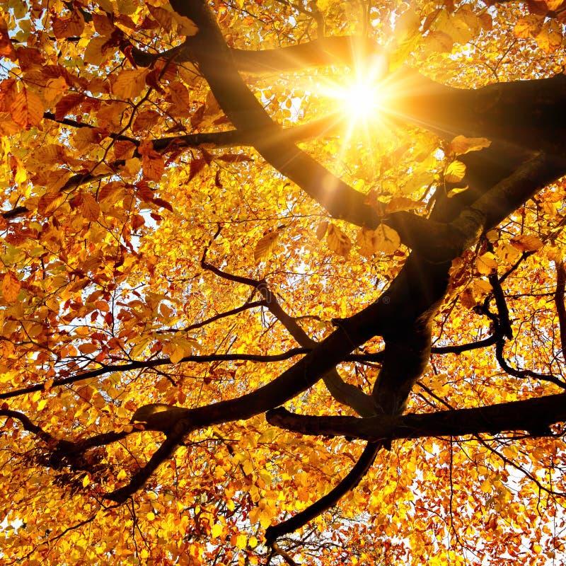 发光在金黄秋天的太阳 免版税图库摄影