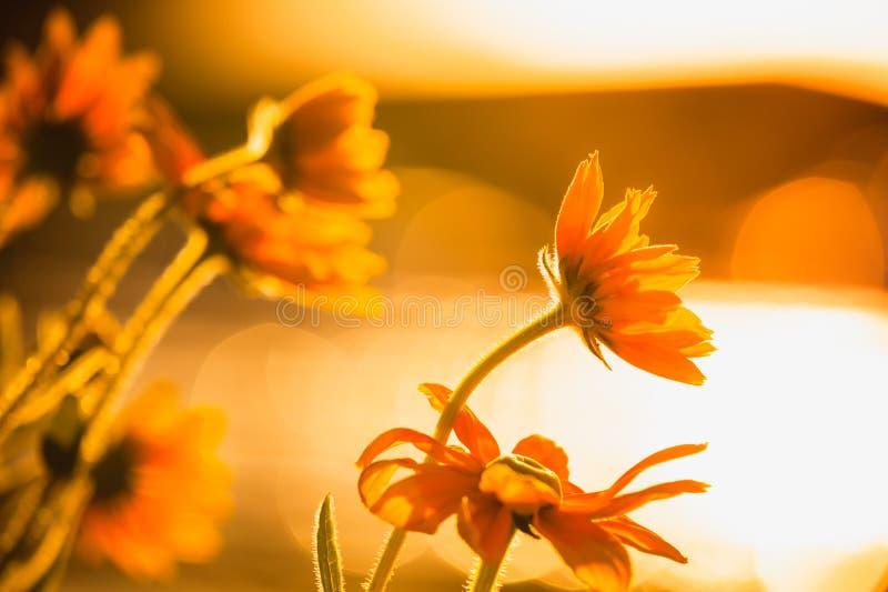 发光在阳光下的明亮的花 免版税图库摄影