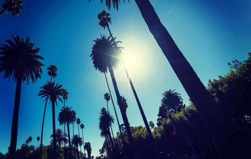 发光在高棕榈树的太阳在洛杉矶 图库摄影