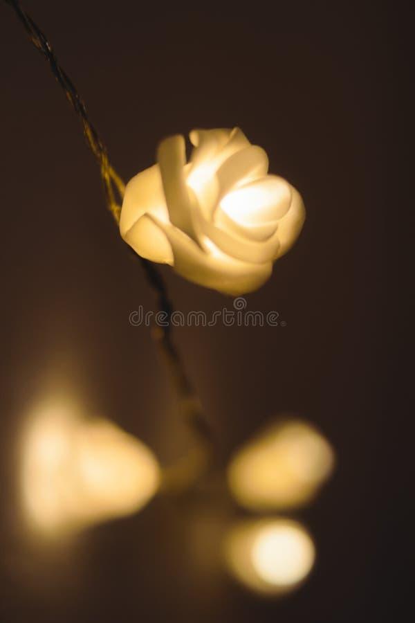 发光的玫瑰带领了轻垂悬在墙壁上 库存图片
