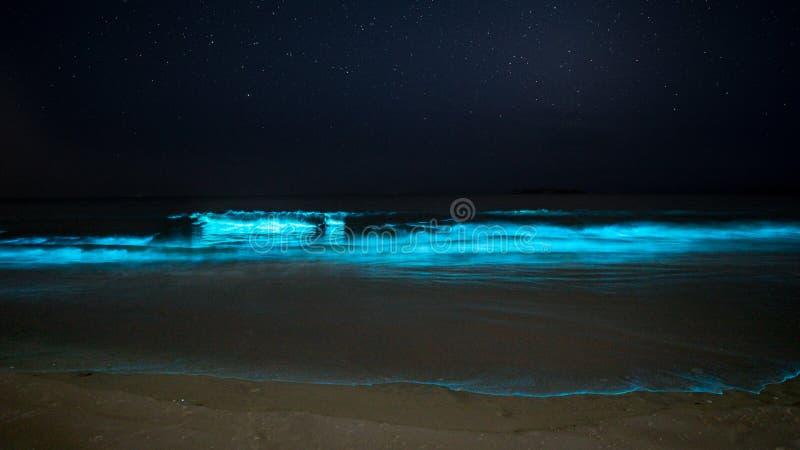 发光的生物发光海滩 免版税库存图片