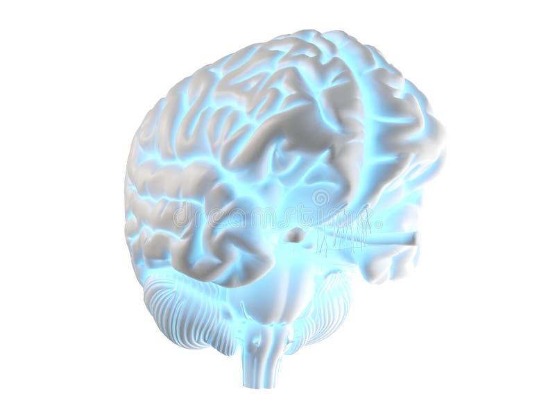 发光的脑子 向量例证