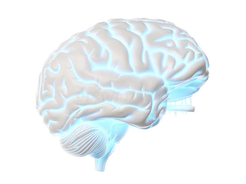 发光的脑子 库存例证