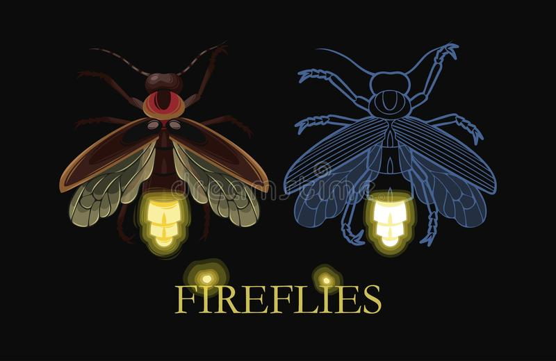 发光的萤火虫的例证 向量例证