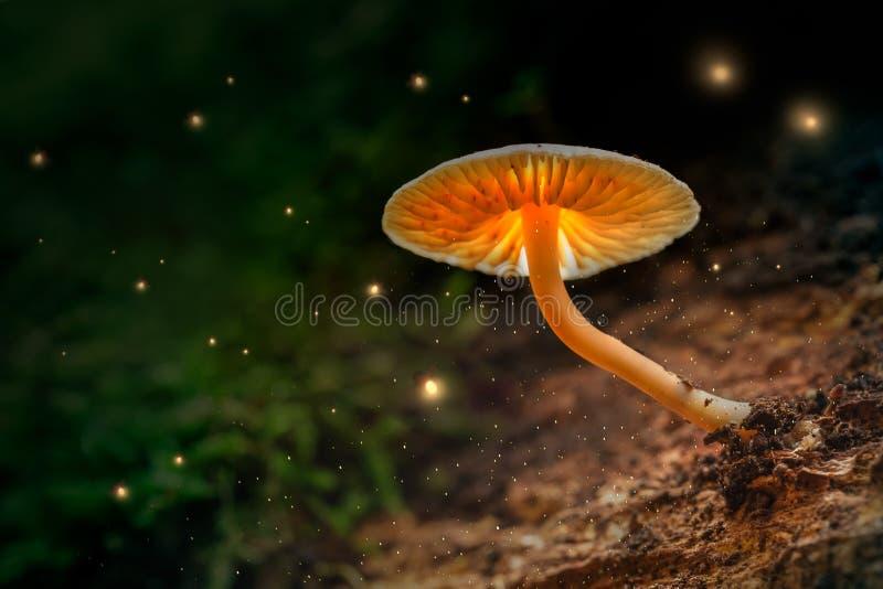 发光的蘑菇和萤火虫在黄昏的不可思议的森林里 免版税库存图片