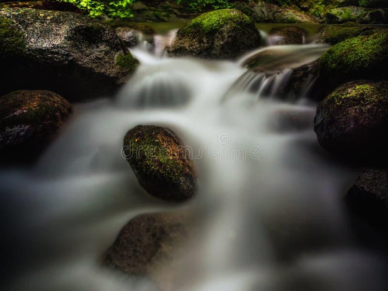Download 发光的青苔 库存照片. 图片 包括有 青苔, 加利福尼亚, 户外, 树木丛生, 长期, 风险, 国家, browne - 72354724