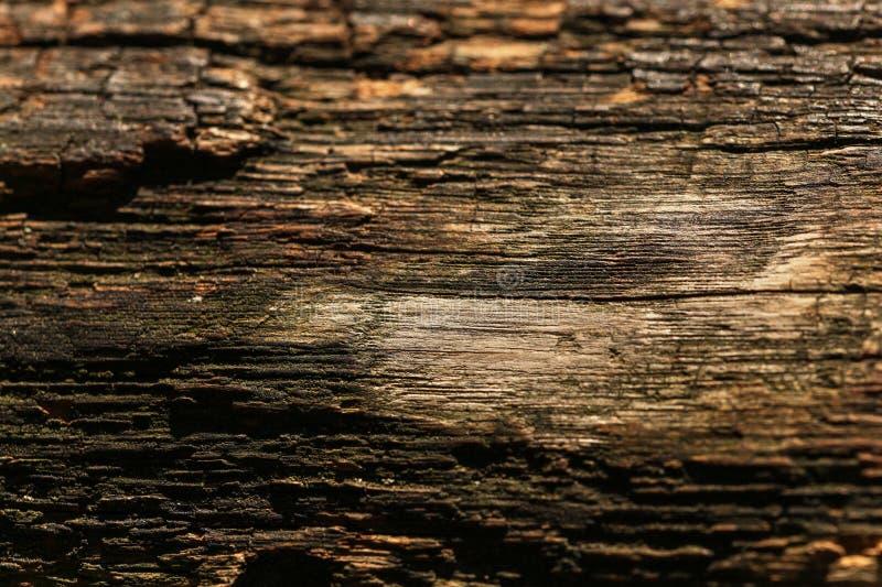 发光老木的太阳上在长木凳结构 自然抽象的背景 库存图片