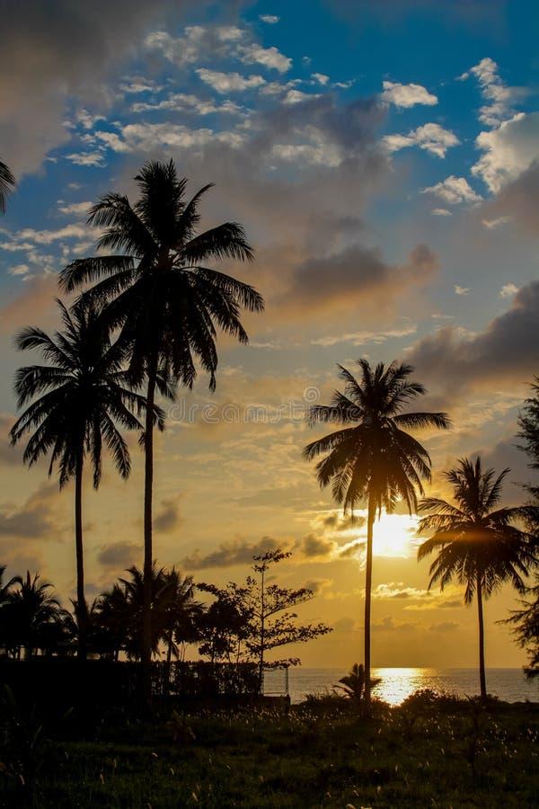 发光通过云彩和棕榈树的日落光 免版税库存照片