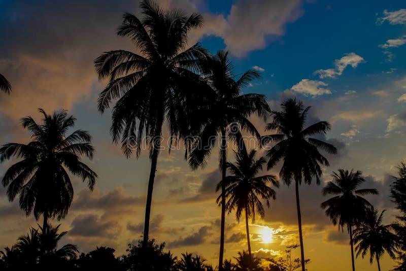 发光通过云彩和棕榈树的日落光 免版税图库摄影