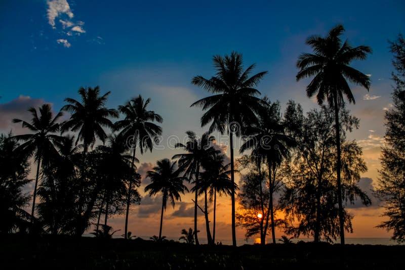 发光通过云彩和棕榈树的日落光 库存照片