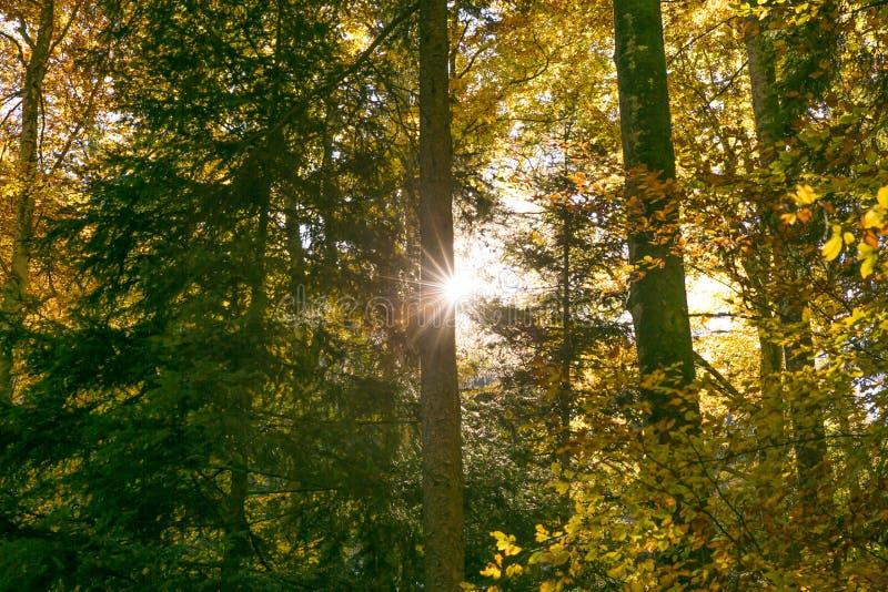 发光通过林木叶子的太阳在夏天 图库摄影