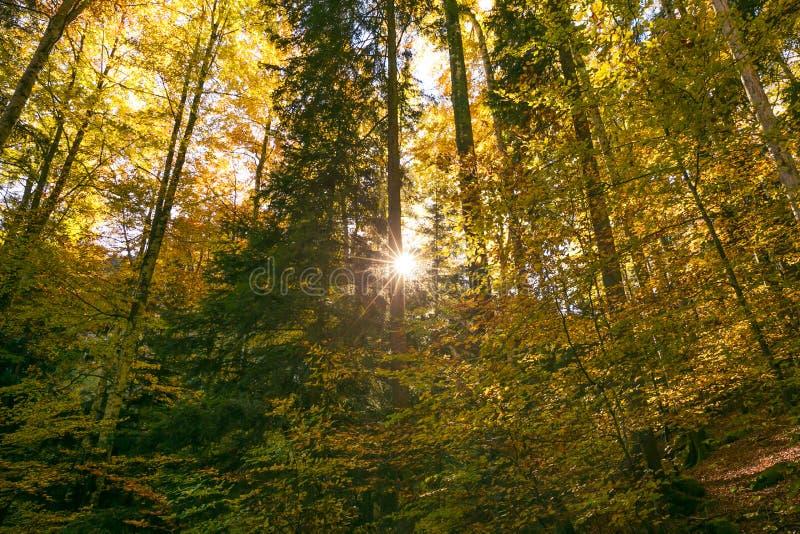 发光通过林木叶子的太阳在夏天 库存图片
