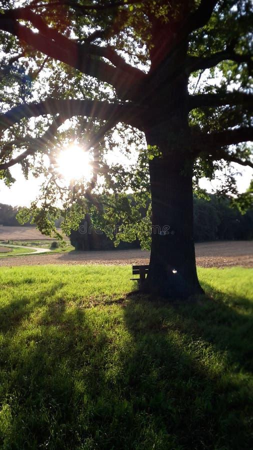 发光通过树枝的太阳 免版税库存照片