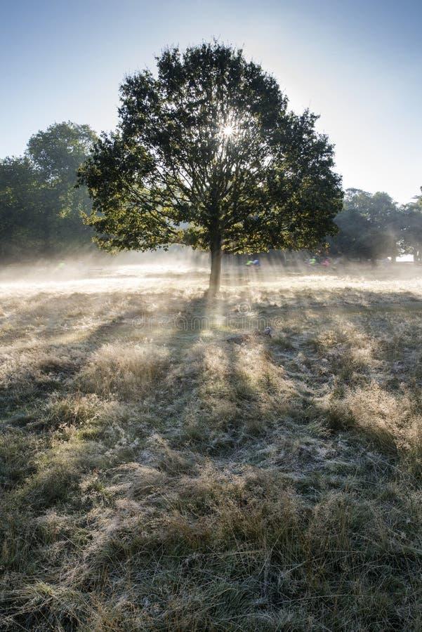 发光通过树的太阳射线在森林里在有雾的秋天秋天s 图库摄影
