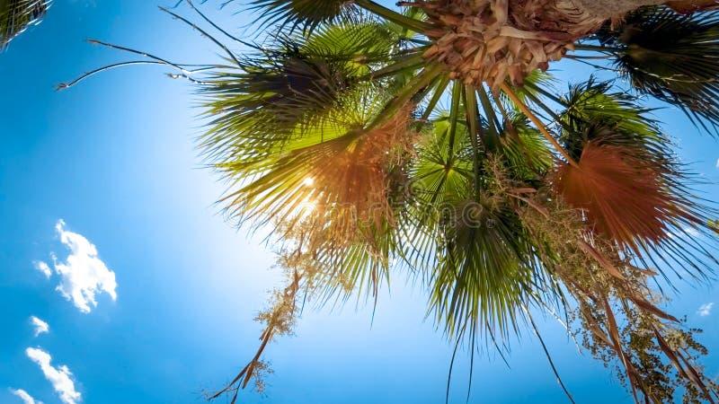 发光通过棕榈树的明亮的太阳光反对天空蔚蓝 库存照片