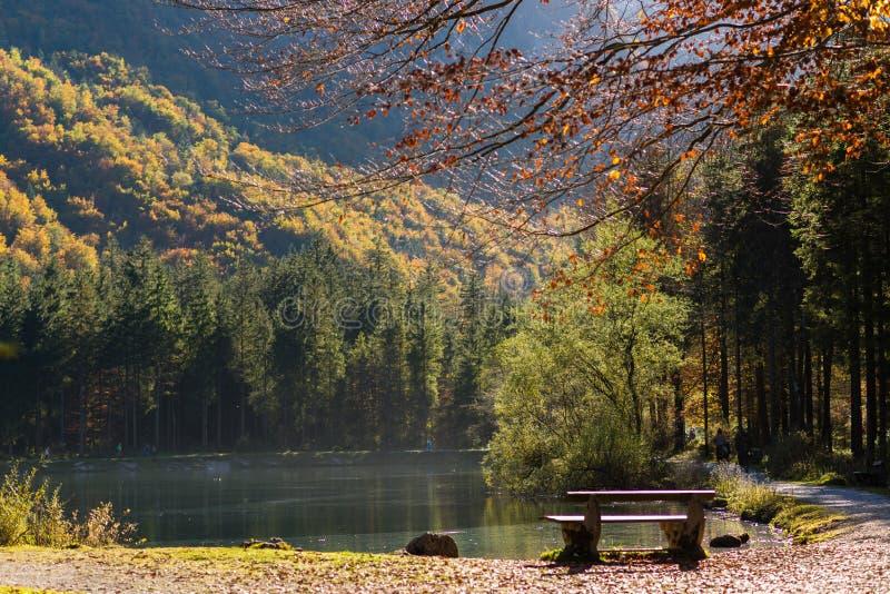 发光通过秋天的太阳forrest与湖 免版税图库摄影