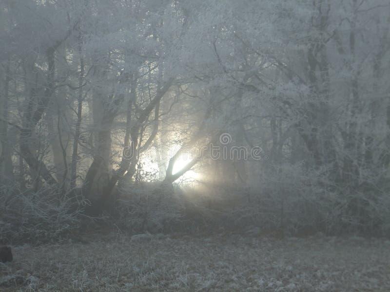 发光通过雾的微弱的阳光在森林里 图库摄影