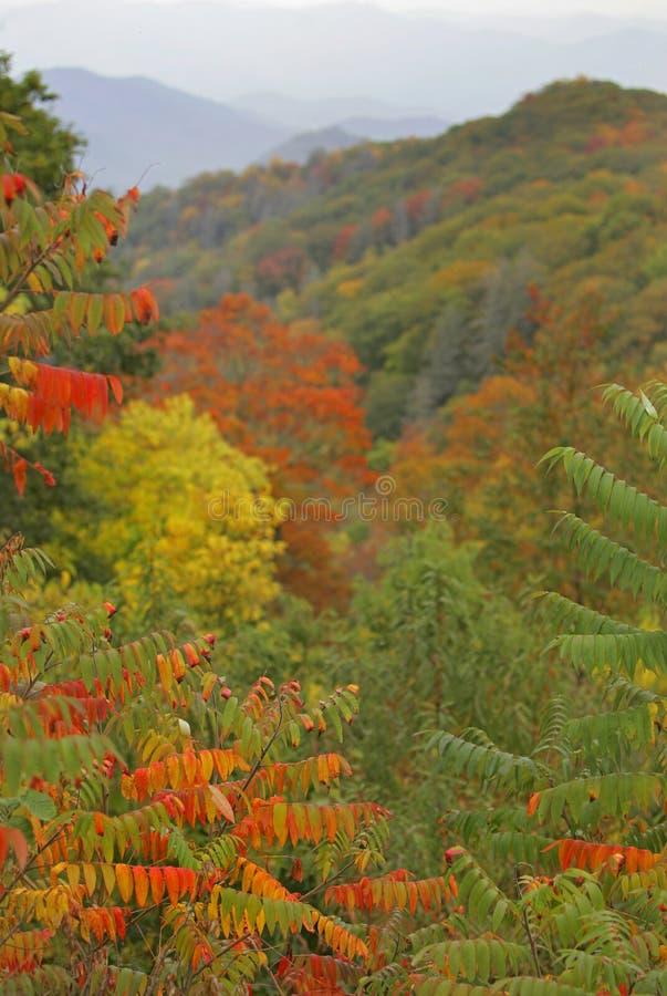 发烟性叶子的山 库存图片