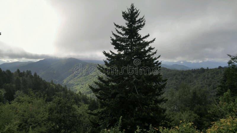 发烟性山树 库存图片