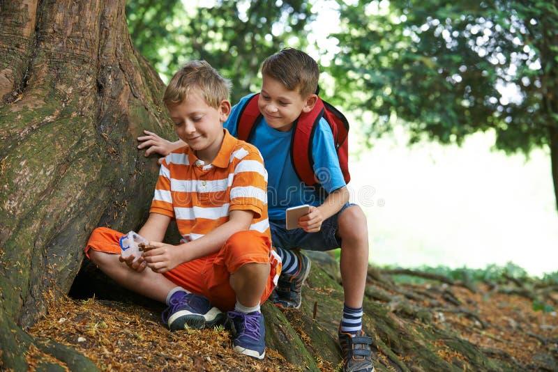 发现项目的两个男孩, Geocaching在森林里 免版税库存照片
