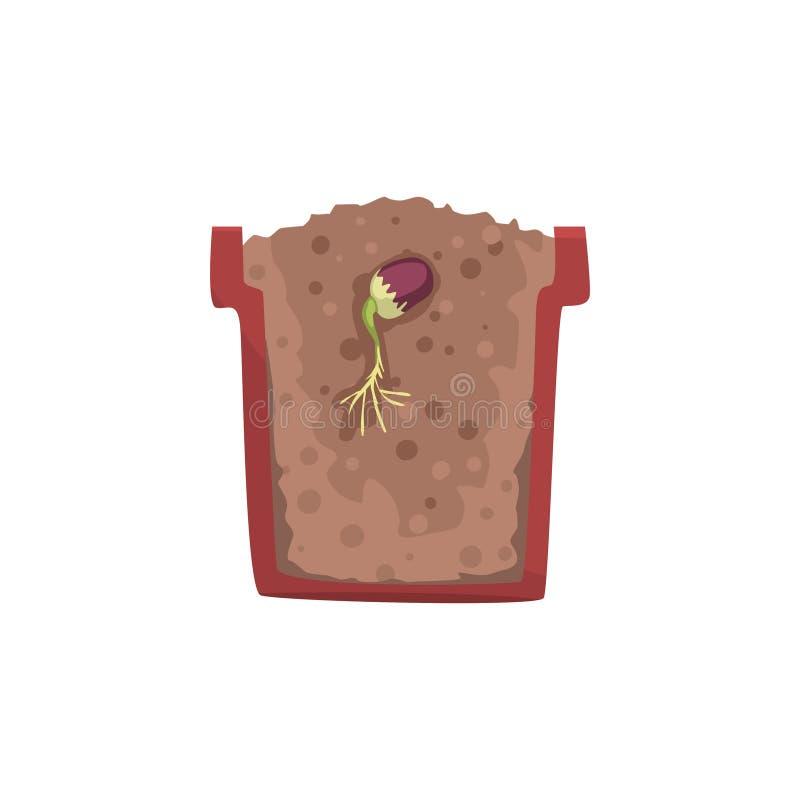 发芽在有地面土壤的,成长阶段,在一个短剖面传染媒介例证的罐一个罐的豆的种子 库存例证