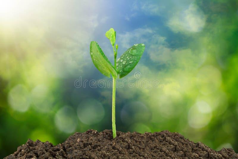 发芽生长从在被弄脏的绿色bokeh和天空背景的土壤 免版税图库摄影