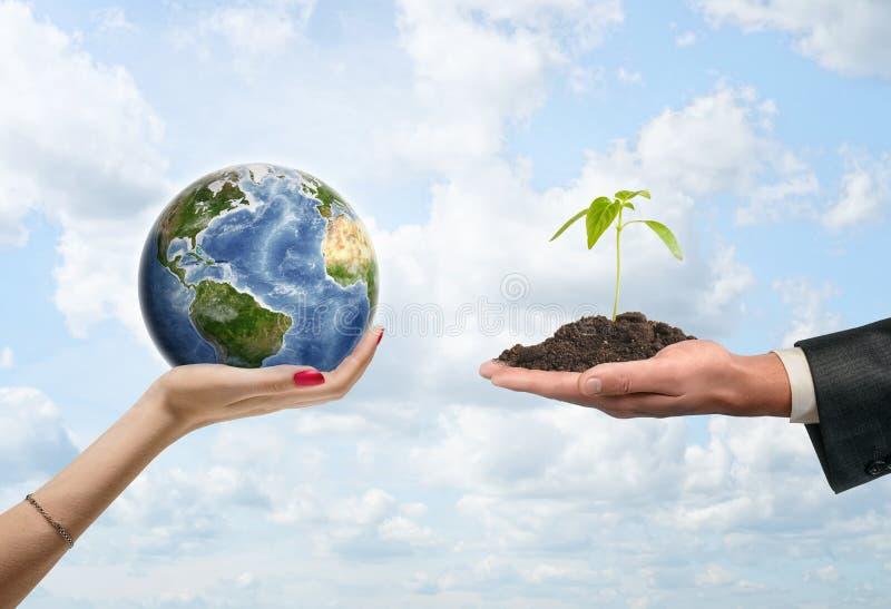 发芽生长在地面棕榈和地球在妇女手上 库存图片