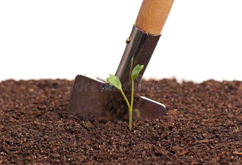 发芽的植物 免版税库存图片