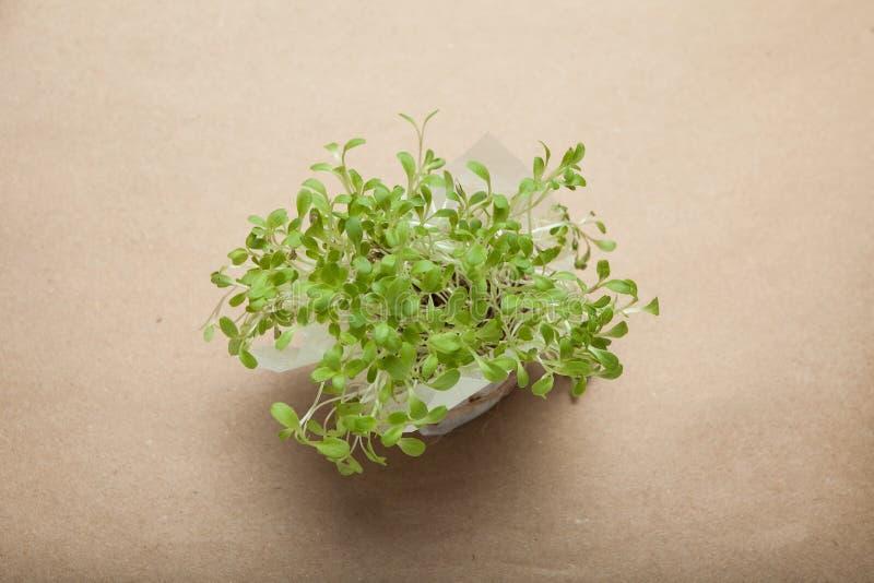 发芽的沙拉种子,在包装纸背景的微绿色 免版税库存图片