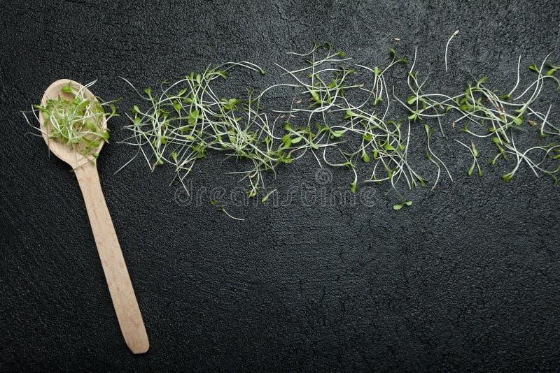 发芽的种子溢出的新芽从一把木匙子的在黑背景 从保佑的微绿色的素食快餐 库存照片