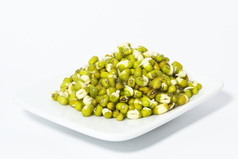 发芽的豆。 库存照片
