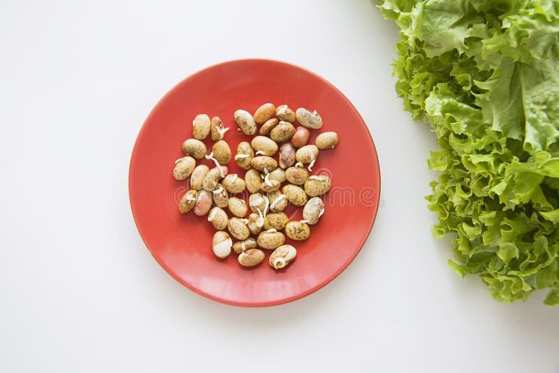发芽的豆和莴苣 库存图片