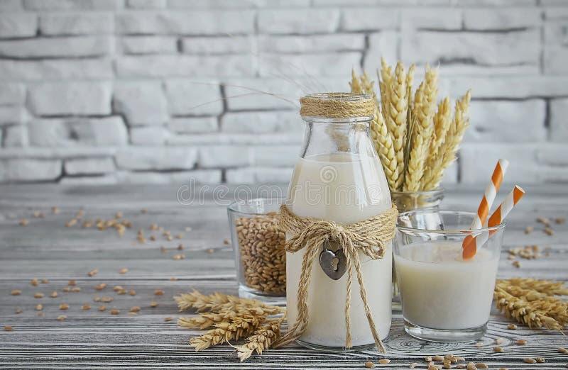 发芽的麦子自创素食主义者牛奶  免版税库存照片